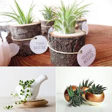plants for office desk crafts home