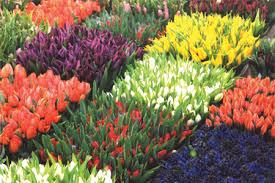 floral interior design interior life style mar apr 2004