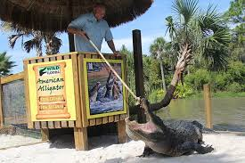 Florida wildlife images Gator and wildlife park wild florida orlando jpg