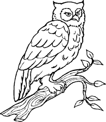 owl on tree coloring pages coloringstar