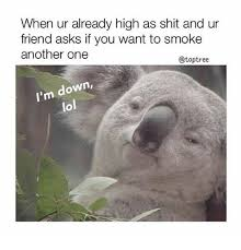 High Koala Meme - when ur already high as shit and ur friend asks if you want to
