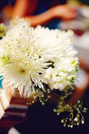 105 best chrysanne images on pinterest chrysanthemums flowers