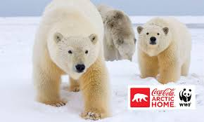 wwf and the coca cola company team up to protect polar bears