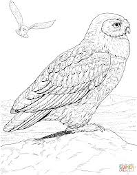 hawk owl coloring page free printable coloring pages