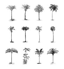 best 25 palm tree sketch ideas on how to paint palm