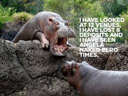 Hippo Memes - today in great tumblrs hippo coworker wired