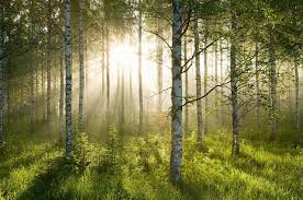 which trees absorb co2 and offset global warming best