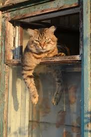 cat running into glass door best 25 cat window ideas on pinterest cat hammock cat stuff
