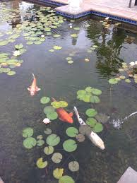 raising fish in your backyard farm is easier than you u0027d think