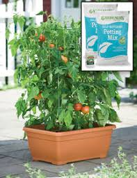 urban gardening with vegetables urban gardens