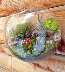 Vase Wall Decor 5 6 Glass Wall Hanging Plant Orb Terrarium With Plant And Live