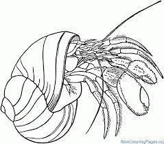 Hermit Crab Coloring Pages Nice Coloring Pages For Kids Crab Coloring Page