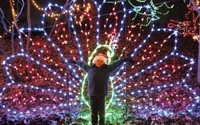 christmas lights at the zoo indianapolis events for december 8 2017 white river state park