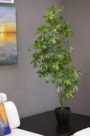 coco u0027s plantation 4 u0027 baby schefflera plant in pot plants and
