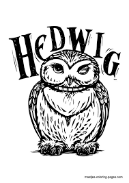 drawn owlet harry potter owl pencil color drawn owlet