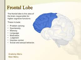Which Part Of The Brain Consists Of Two Hemispheres The Human Brain Anatomy