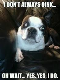 Boston Terrier Meme - those boston terrier farts ugh ola see more boston terrier