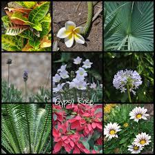 native plants brisbane city botanic gardens brisbane brisbane