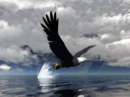 stellers sea eagle wallpapers animal 3d eagle flying on water wallpapers hd picture free
