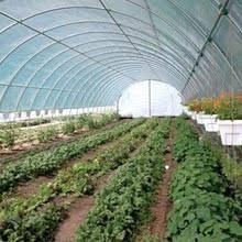 Backyard Green House Patio Greenhouse Hobby Greenhouses Beginner Greenhouses Mini