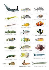 fish types and names list of small fish names 2017 fish tank