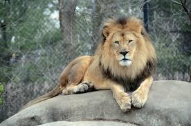 zoo lessons tes teach