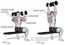 seated dumbbell overhead press a compound exercise target muscle