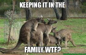 Kangaroo Meme - keeping it in the family wtf kangaroo gang bang aussie memes