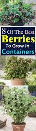 hardest plant to grow best 25 container garden ideas on pinterest container gardening