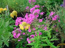plant for bedroom plants for bedroom u2013 bedroom at real estate