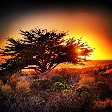 Moonstone Cottages Cambria Ca by 49 Best Moonstone Beach Images On Pinterest Moonstone Beach