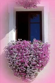 balkon blumen balkon bepflanzen blumenkasten herzenförmig blumen alles zu