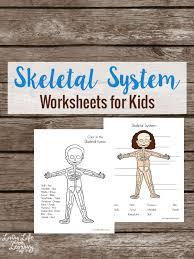 skeletal system jpg