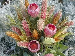 Protea Flower Protea Flower Runescape Margarite Gardens
