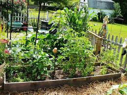 vegetable garden small yard u2013 cicaki