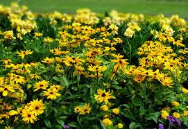 home rcop clesen s ornamental plants