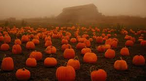 scary pumpkin wallpapers pumpkin wallpaper8 jpg