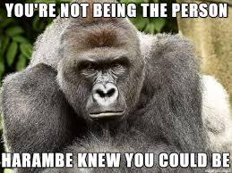Ape Meme - judgmental ape meme on imgur