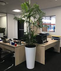 plants for office seifrizii
