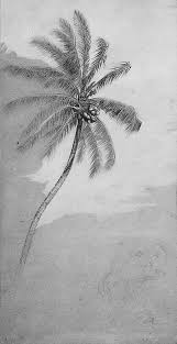 14 best trees images on pinterest drawings bird drawings and