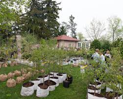 go plant tree sale lake forest open lands
