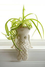 Pots For Plants by Best 10 Plant Pots For Sale Ideas On Pinterest Used Containers