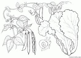 coloring page lettuce peas and beans