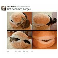 Burger Memes - cat burger meme by cyndaquill memedroid