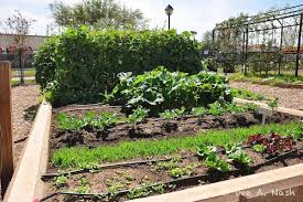 my oklahoma fall vegetable garden red dirt ramblings