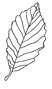 printable leaf templates many interesting cliparts