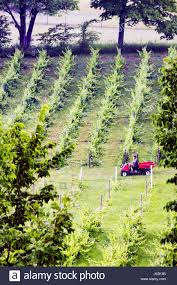 michigan traverse city leelanau peninsula cicconne vineyard winery