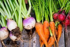 Green Root Vegetables - mound gardening basics for growing root vegetables