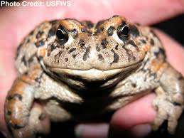 learning about endangered frogs frogs are green