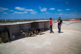 Dog On A Roof Hamas Bans Dog Walking In The Gaza Strip Nbc News